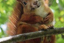Cute Animals / So cute