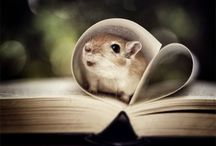 Too cute to handle  / Kaikkea ihanaista ! Lähinnä eläimiä :)