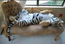 Leopard snow/Tygrys