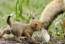 Állat világ / vadon élő állatok