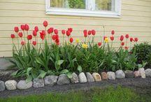My garden / Minun pihani