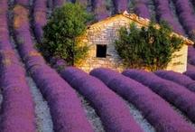 Dream garden / by Zachiesmom Haggett