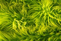 50 Shades of green / by Karen Balest