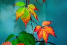 Leaves / by Aimee Radman