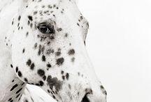 """Almost unicorns.."" a.k.a Horses"