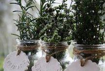 | Herbes folles | / Fines herbes, Plantes aromatiques
