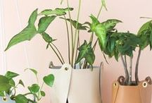 Deco details || Green home