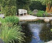 Fotos aus meinem Garten / Mein Garten, Gartenprojekte, Pflanzen und Koi, Gardening and Koi