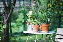 Garden / by ineken