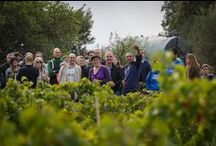 Encuentros con valores - Girona (octubre 2015) / Visita de clientes de Triodos Bank a Celler Can Torres, en Girona, descubriendo en primera persona esta iniciativa de viticultura ecológica que trabaja con banca ética.
