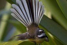 Wings / Mooie of aparte vogels