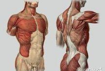 Анатомия, строение тела