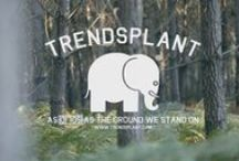 Trendsplant