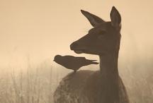 animalia / animals