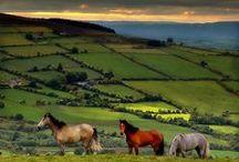 All Things Irish / by DIANE MANNING