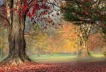 colorful autumn  / ...and how to celebrate it