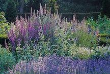 *garden: design II / überwiegend Prärie- und Kiesgärten / prairie & gravel gardens / grasses