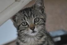 CATS / Les chats sont vraiment incroyables