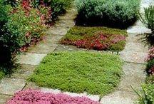 *garden: groundcovers / rasenalternativen & bodendecker warum nicht mal rasen durch blühende teppiche ersetzen? pflegeleicht und teils begehbar!