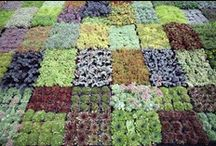 *garden: succulent paint box / sukkulenten in haus & garten