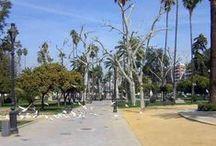 Jardines de Córdoba / Córdoba es referente nacional en el mantenimiento de zonas verdes urbanas por habitante con sus 3 MM de m2, 10% de superficie urbana y 1 árbol cada 5 habitantes.