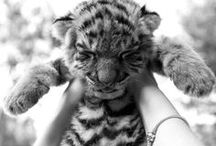 ~<3 RaWrrss<3 ~ / ~Animals all over the world <3<3