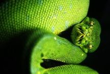 ~ Snakes ~ <3<3 / beautiful snakes <3