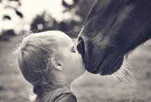 horse  / paarden