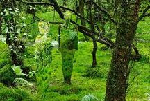 GREEN world / alles GRÜN / aaaaahhhhhh - green with all its shades! Nature has it all...