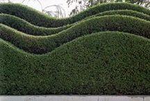 *garden: hedges & topiary / hecken & formschnittgehölze