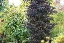 *garden: trees & shrubs / bäume & sträucher für den garten