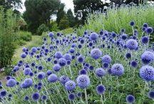 *garden: perennials / stauden & gräser