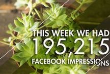 Facebook Weekly Impressions / Our growth and exposure for our clients.