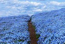 my kind of blues / blautöne / einfach mal etwas blau machen... :-))