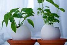 Jardins et agriculture urbaine / Trucs et astuces pour jardiner écolo en ville comme en région!