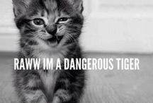 Cats / Cats...