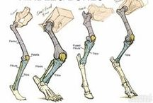 CONSTRUCTION: Animals / Anatomical breakdowns and references for a variety of animals