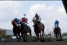 Horse Racing / It's only here once a year...enjoy live horse racing excitement at The Big Fresno Fair each Fall, then join us year round for Satellite Wagering!