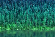 ✼ green & nature // von ERIKA / #green #colour #mood #nature #animals #details #fresh #liveisfun #indigene #native #local #homecountrynational #wildlife