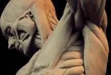 Anatomie artistique / Planches et études anatomiques pour le dessin et la sculpture.