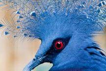 ♘ blue & wildlife // von ERIKA / #blue #colour #mood #nature #details #pure #animals #indigene #native #local #homecountrynational #wildlife