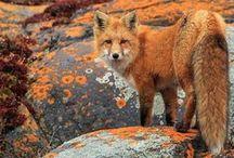 ♘ red & wildlife // von ERIKA / #red #colour #mood #nature #details #pure #animal #indigene #native #local #homecountrynational #wildlife