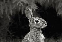 ♘ grey & wildlife // von ERIKA / #grey #colour #mood #nature #details #pure #black #white #indigene #native #local #homecountrynational #wildlife