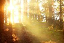 inspiration // von ERIKA / the thoughts about von ERIKA are based on #forest #clearing #inthewoods #woods#erica #light #silence #wherewecomefrom and #feelcomfy // #wald #lichtung #erika #sonne #licht #strahlen #ruhe #wowirherkommen und #unswohlfühlen