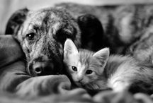 Dogs Vs. Cats / by Always Jewels