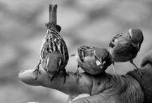 Nature / Animals