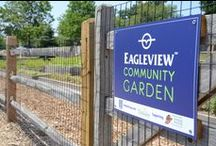 """Gardening in Town Center / Do you have a green thumb and want to make a difference in your community with other green thumbs? The Eagleview Community Garden is the perfect opportunity for gardening, socializing, and giving back to the community. The garden works in conjunction with the Triskeles """"Food for All"""" program, & the produce harvested supports the Chester County Food Bank.  Email us if you are interested in helping in our garden!  610-458-1900   events@hankingroup.com"""