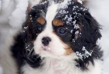 Dogs / Sweet and funny