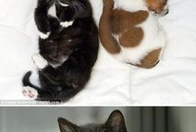 Cats and puppies / Sweet