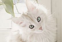 Cats / Sweet and funny